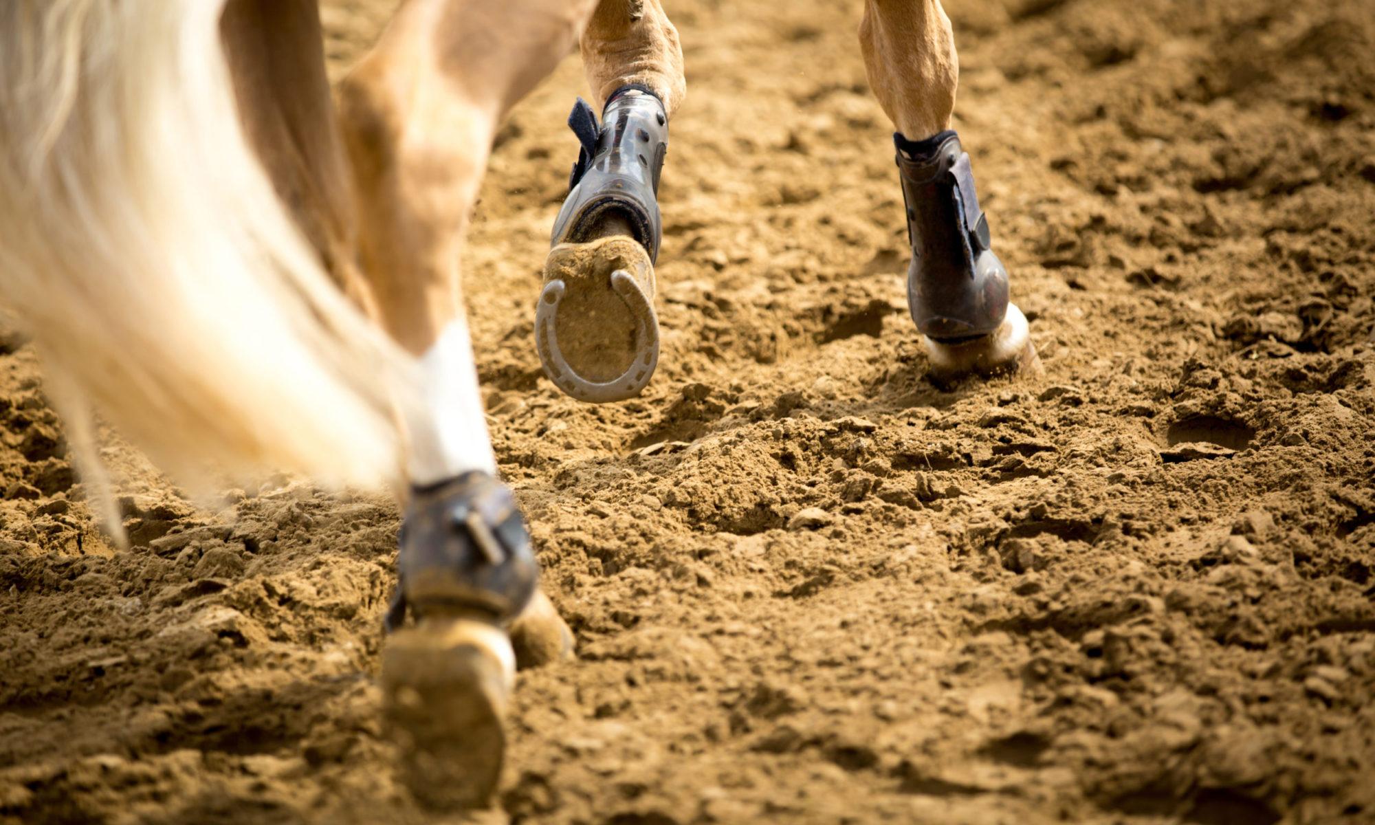 Sportpaarden begeleiding
